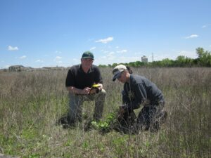 GPS survey of Milkweeds (Asclepias spp.) for monitoring of Monarch butterfly (Danaus plexippus) migration, whose numbers have drastically declined in recent years.
