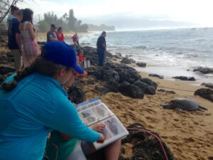 In the foreground, a volunteer and Linda trying to identify the Green Sea turtle on the beach based on a photo ID book.
